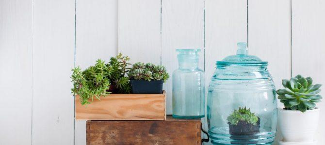 Dúvidas sobre como decorar com plantas naturais? Tire aqui! – WhatsApp 96288-0872