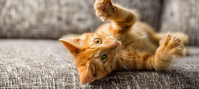 5 dicas para remover pelos do seu animal de estimação do sofá