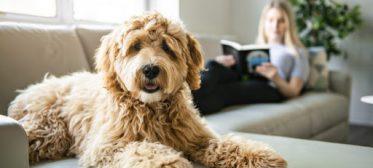 Confira dicas super práticas de como impermeabilizar sofá!